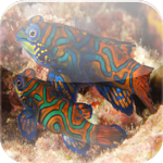 Top Famous Fishes